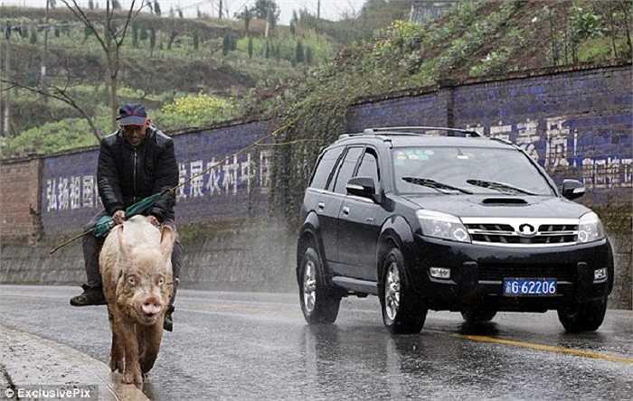 Chuyện lạ có thật này xảy ra tại thành phố Trùng Khánh, Trung Quốc.
