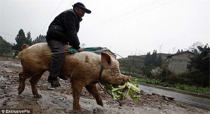 Hình ảnh này nhanh chóng gây xôn xao Trung Quốc trong hơn 1 năm qua và được nhiều báo chí thế giới đưa lại.