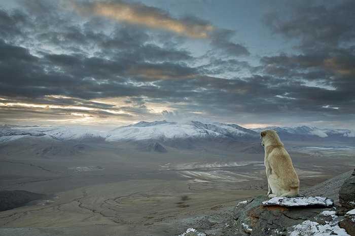 Himalayas từ độ cao 5000m
