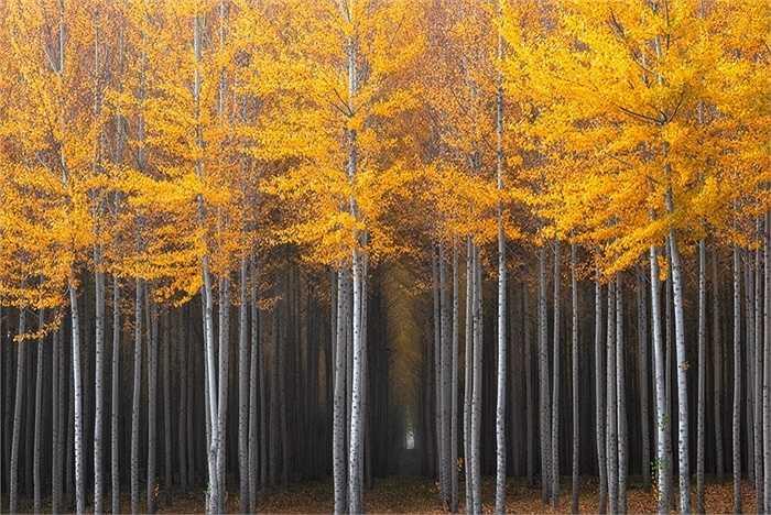 Bắc Oregon