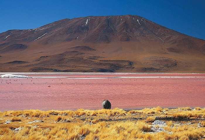 Hồ Laguna Colorada hay còn gọi là Red Lagoon là một hồ muối cạn phía tây nam Bolivia, hồ nước đỏ có một không hai trên thế giới