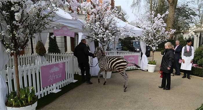 Kiều nữ Tamara Ecclestone (con gái tỷ phú Bernie Ecclestone) và chồng vừa tổ chức bữa tiệc sinh nhật sang trọng cho con gái Sophia 1 tuổi. Đây là bữa tiệc với chủ đề 'phim hoạt hình'