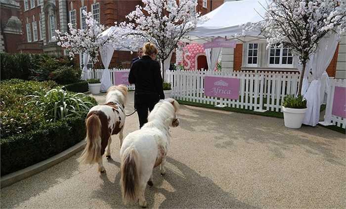 Ngoài các vị khách mời là bạn bè của gia đình, bố mẹ bé Sohia còn đưa cả ngựa vằn và những chú cún đáng yêu đến dự