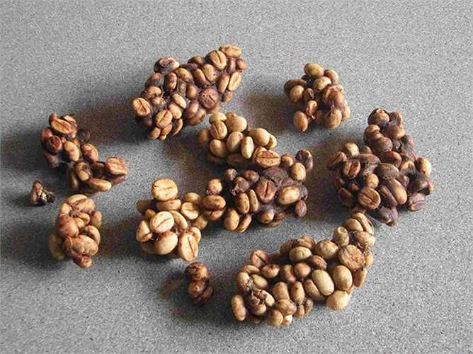 2. Cà phê Kopi Luwak:  220 – 1.322 USD/kg     Loại cà phê đắt nhất thế giới này được lấy từ phân chồn châu Á. Tuy nhiên, phương pháp sản xuất hạt cà phê Kopi Luwak bị chỉ trích vì điều kiện nuôi giữ khắc nghiệt.