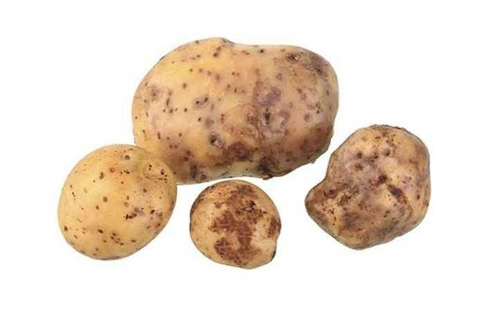 6. Khoai tây La Bonnotte: 660 USD/kg     Loại khoai tây này chỉ mọc ở hòn đảo Noirmoutier phía tây nước Pháp. Khoai La Bonnotte được trồng trên quy mô nhỏ và thu hoạch bằng tay mỗi năm một lần. Năm nay, khoai sẽ được trồng trong vườn của lâu đài Versailles, Pháp.