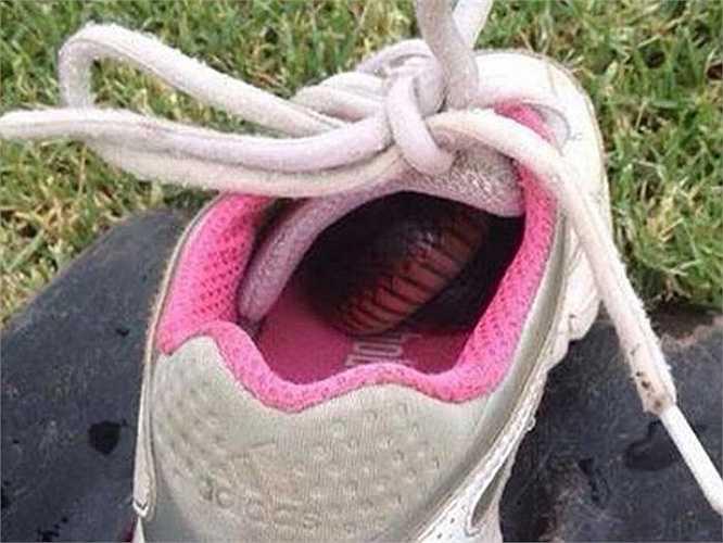 Một con rắn đen bụng hồng trú ẩn trong chiếc giầy. Gilbert cho biết, ngay khi biết đi, anh đã thích thú với trò đuổi bắt thằn lằn. Mẹ anh kể, anh bắt được con rắn đầu tiên trong đời - loại có nọc độc mạnh, khi mới lên 5.