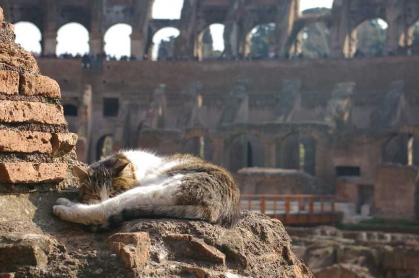 10 địa danh nổi tiếng bị thống trị bởi các loài động vật