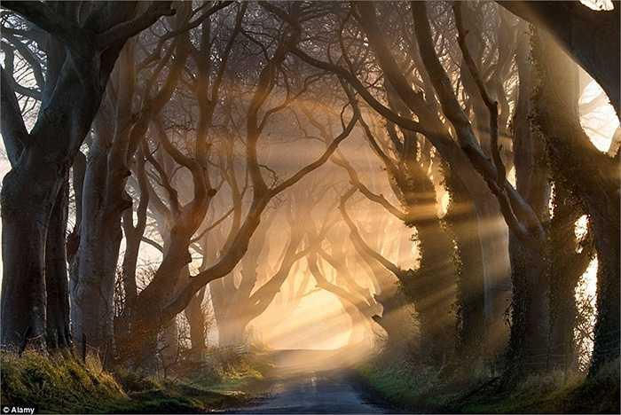 Hàng rào Bóng tối tại Ireland: khi ánh nắng chiếu xuyên qua thân của hàng rào này và thành những tia sáng mờ ảo, trông nơi đây như một cảnh quan bước ra từ một câu chuyện cổ tích.