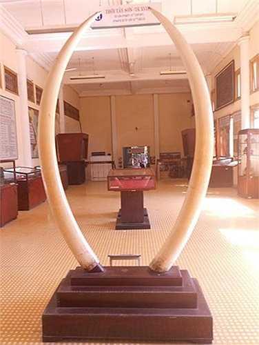 Bên trong những căn nhà hoành tráng một thời của giới đại gia giàu có, nhiều người có thể bắt gặp những cổ vật quý hiếm. Cuối thế kỷ 19, dòng họ Dương ở Bình Thủy (Cần Thơ) đã bỏ ra 4 ngàn đồng bạc trắng (tiền Đông Dương) để mua cặp ngà voi độc nhất vô nhị.