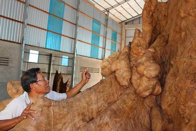 Theo chủ cửa hàng, đây là gốc cây bàng đá đực, ông mua thô với giá 35 triệu đồng ở ấp Phụng Từ 1, xã Song Phụng, huyện Long Phú, tỉnh Sóc Trăng.