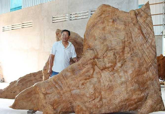 Ông Mai Kiên cho biết, gốc cây sau khi được chế tác sẽ có thêm đài sen và tượng Phật Thích Ca chạm khắc bằng một khối gỗ khác cao 3 m, nặng 5 tấn. Tổng khối lượng tác phẩm hoàn thành sẽ hơn 30 tấn.