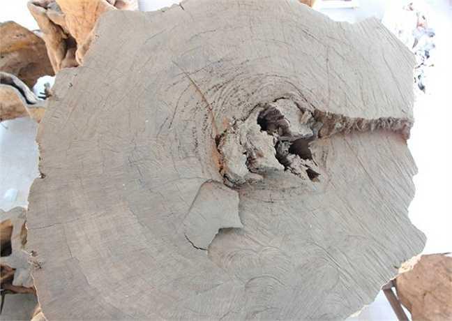 Khi mới đưa cây về nhà đã có người trả giá 3 tỷ, nhưng tôi không bán. Tiếp đến, một công ty ở Nha Trang ngã giá 12 tỷ. Mới đây, một ông chủ ở Đà Nẵng đưa ra mức giá 30 tỷ để sở hữu gốc cây đang trong quá trình gia công', ông Kiên tiết lộ.