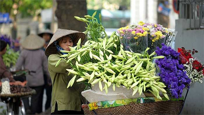Hoa loa kèn, hay còn có tên khác là hoa Bách hợp hay huệ Tây, loài hoa được người Pháp đưa vào Việt Nam những năm đầu thế kỷ XX. Trải qua một thời gian dài, loài hoa trắng tinh khôi này đã trở thành một biểu tượng của tháng tư Hà Nội. Bởi hoa loa kèn chỉ nở duy nhất một tháng trong năm.