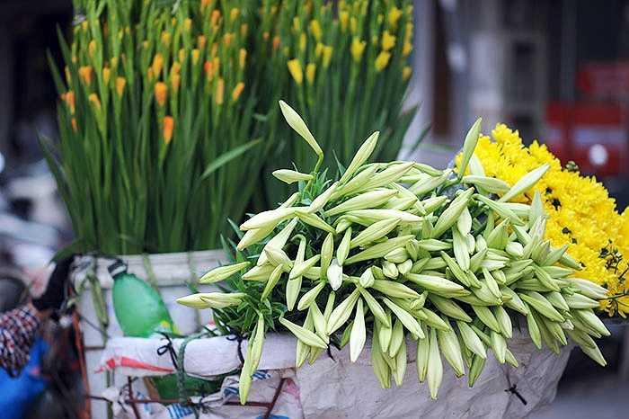 Hoa loa kèn thường nở rộ khi tiết trời chuyển nắng ấm nên còn được gọi là hoa mùa hạ, báo hiệu hè đã đến. Tuy nhiên, những ngày cuối tháng 3 này do thời tiết ấm lên nên loa kèn cũng đã bung nở.
