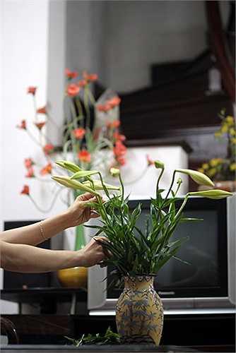Vẻ đẹp tinh khôi, không phô diễn, đem lại cảm giác mát lành nên loa kèn thường được cắm lọ để trang trí ở những nơi trang trọng như phòng khách của mỗi gia đình hoặc trong phòng làm việc. (Ảnh: Việt Linh)