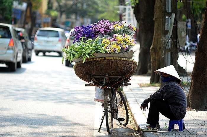 Nếu xưa kia chỉ có nhà giàu sang mới thường cắm hoa loa kèn trong phòng khách, thì nay hoa loa kèn đã trở nên phổ biến ở Hà Nội. Mỗi độ tháng Tư về lại tấp nập hình ảnh những hàng hoa rong chở loa kèn xuôi ngược trên phố.