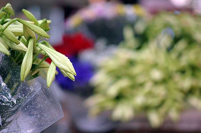 Vào đầu vụ, hoa loa kèn có giá từ 30.000 tới 40.000 nghìn đồng một bó/10 bông.