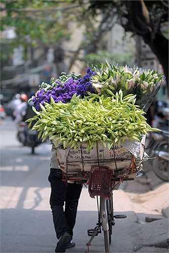 Loa kèn được trồng nhiều ở các vườn hoa quanh Hà Nội như vườn hoa Tây Tựu, Quảng Bá, Nhật Tân… Hoa thường được thu mua tại vườn sau đó cùng các gánh hàng rong len lỏi trên khắp phố phường Hà Nội.