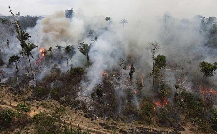 Nạn chặt phá rừng. Mỗi năm chúng ta mất rất nhiều cánh rừng khổng lồ và với tỷ lệ chặt phá hiện tại, đến năm 2050, một nửa diện tích rừng nhiệt đới của thế giới sẽ không còn nữa.