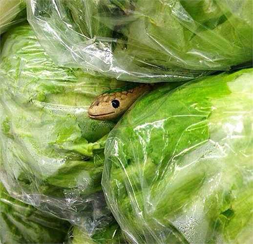 Đặt con rắn giả vào trong đống rau sẽ khiến mọi người hoảng hồn