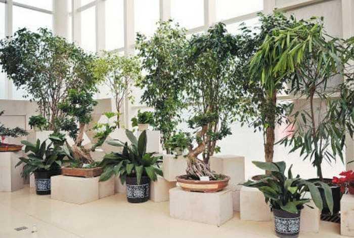 Không gian trong nhà quá nhiều màu xanh lục sẽ khiến bạn khó tập trung. Màu xanh lục đại diện cho sức khỏe và sức sống. Rất nhiều người có sở thích trồng nhiều cây xanh hoặc sử dụng nhiều đồ trang trí màu xanh lục.