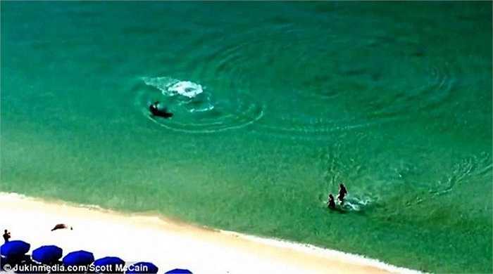 Một người bạn của hai du khách trên đã phát hiện ra con cá mập và hét lớn
