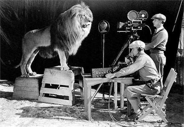 Nếu bạn hay nhìn thấy hình hiệu con sư tử gầm gừ trong các bộ phim của hãng MGM như phim hoạt hình Tom và Jerry thì đây chính là hậu trường để tạo ra hình hiệu đó, năm 1929.