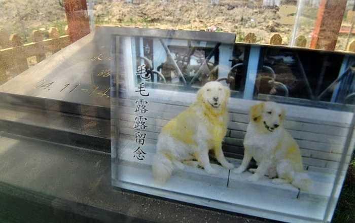 Ảnh chụp chú chó sống cùng chủ nhân 10 năm. Ngoài những con vật cưng sống cùng chủ nhân nhiều năm, có những ngôi mộ của vật cưng chỉ sống với chủ nhân nửa năm hoặc vài tháng