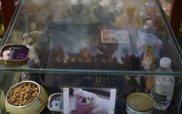 Một chú chó sống cùng chủ nhân 10/1999 đến 3/2014 khoảng gần 10 năm được chủ nhân chôn cất tại đây
