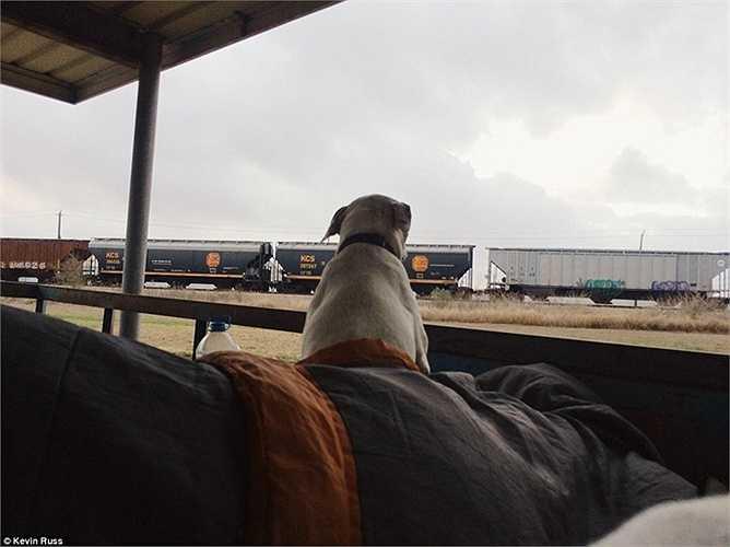 Chú chó ngồi nhìn những đoàn tàu