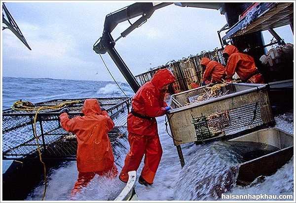 Ngư dân đánh bắt cua: Công việc này nguy hiểm gấp 26 lần công việc bình thường. Trong năm 2007, 126 ngư dân đánh bắt cua ở Alaska bị chết. 80% nguyên nhân do hạ thân nhiệt hoặc bị rơi khỏi tàu và chết đuối.