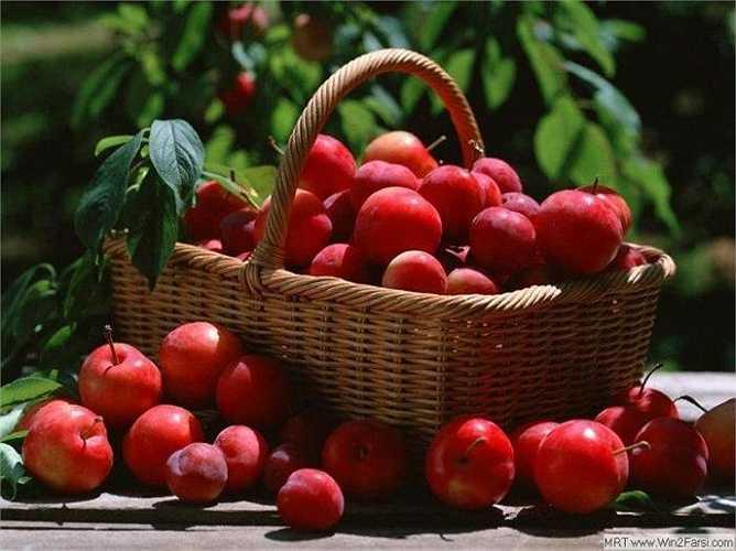 2. Quả táo: Trong hạt của quá táo có nhiều cyanide, chất làm ngăn cản quá trình hấp thụ oxy của các tế bào trong cơ thể, từ đó dễ gây ngạt, đặc biệt là vùng não bộ.