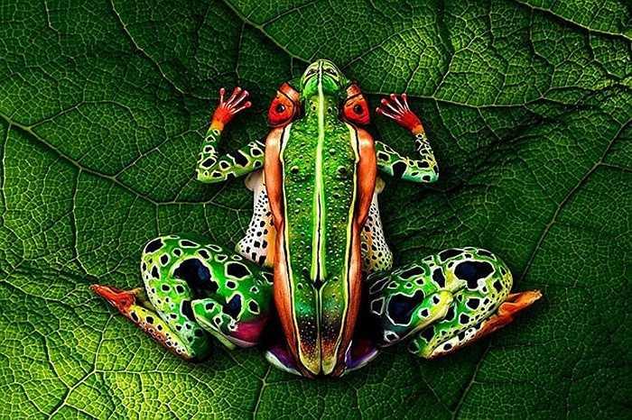 Đây là những tác phẩm của họa sĩ Italy Johannes Stötter. Ông từng đoạt giải nhất cuộc thi quốc tế về vẽ tranh trên cơ thể người năm 2012.