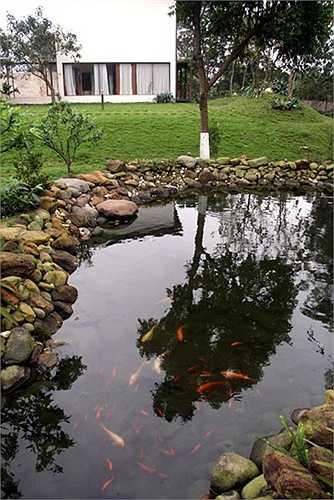 Ao cá nhỏ của gia đình cũng được thiết kế rất đẹp mắt.