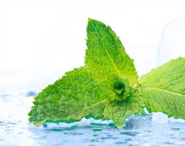 Xoa dịu vết côn trùng cắn: Thoa một ít nước chút bạc hà vào vết côn trùng cắn hay đốt để làm dịu ngứa và làm mát làn da của bạn.