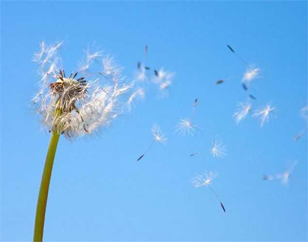 Dị ứng: Những người bị dị ứng với phấn hoa thường sợ mùa hè, vì phấn hoa trong không khí làm chảy nước mũi, hắt xì và chảy nước mắt. Đối với những người bị dị ứng với bụi thì sợ thời tiết khô hạn, hoặc có người bị dị ứng khi thay đổi nhiệt độ đột ngột.