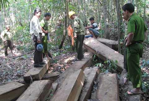 phá rừng, Bà Nà, Núi Chúa, Đà Nẵng, khởi tố, bắt giam