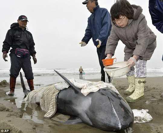 Người dân Nhật Bản tưới nước lên các con vật