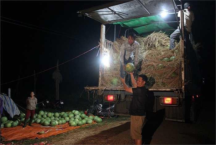 Nhiều tấn dưa được chất đầy các xe tải