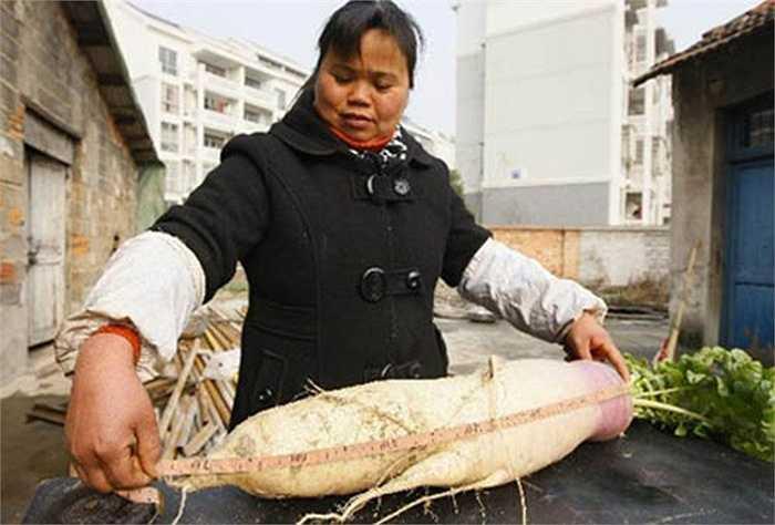 Cách đây không lâu, một nông dân ở Chiết Giang (Trung Quốc) cũng thu hoạch được một củ có khối lượng 6,2 kg, còn củ kia nặng 5,75 kg.