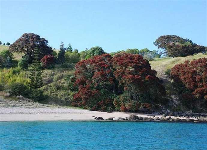 Nơi đây là khu vực lặn, câu cá hàng đầu thế giới. Hòn đảo từng được dùng để tham quan, du lịch kèm nuôi bò, cừu