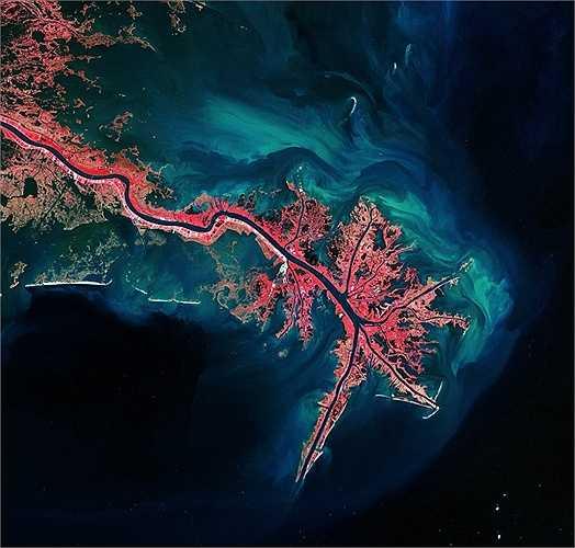 Đây là đồng bằng sông Mississippi, Vịnh Mexico. Thảm thực vật có màu hồng và trầm tích là phần màu xanh sáng và màu xanh lá cây.
