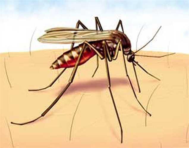 Côn trùng cắn: Nghệ là một liều thuốc tốt khi bị viêm và đau. Trộn nghệ với dầu mù tạt và đắp lên vết cắn để giảm đau, sưng và giúp loại bỏ các độc tố bên trong da do côn trùng cắn.