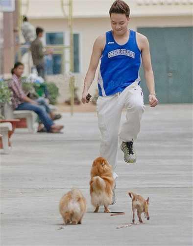 Ngoài 3 chú cún mà nam ca sỹ đang vô tư vui đùa trong hình, hiện nay Cao Thái Sơn đã nhận nuôi thêm thành viên thứ 4 và đặt tên chúng là  Phốc, Ami, Louis và Kiki.