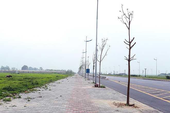 Những ngày gần đây, nhóm công nhân đã tới chặt bỏ hàng chục cây khô để thay thế những cây mới. Nhiều gốc cây khô chưa được thu dọn vẫn nằm lăn lóc trên vỉa hè.