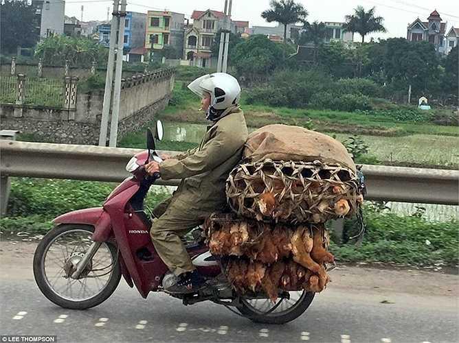 Nhiếp ảnh gia Lee Thompson ghi lại cảnh tượng người đàn ông đi xe máy chở theo những lồng gà sống tại Sapa vào đầu tháng này.