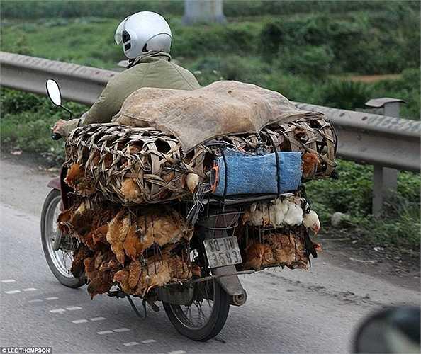 Dường như không có giới hạn nào cho những hàng hóa được chở sau xe máy ở Việt Nam.