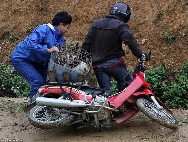 Một chiếc xe máy chở theo 8 con dê phía sau bị đổ vì đường trơn.