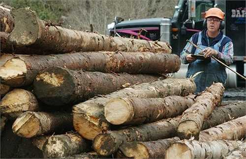Một trong những công việc tồi tệ nhất năm 2015 là thợ chặt gỗ. Mức lương trung bình của thợ chặt gỗ là 34.110 USD/năm và khả năng phát triển nghề nghiệp là -13%.