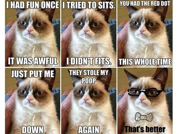Bức ảnh 'chú mèo khó tính' này cũng được cộng đồng mạng đặc biệt yêu thích. Chú mèo này có tên thật là Tard.